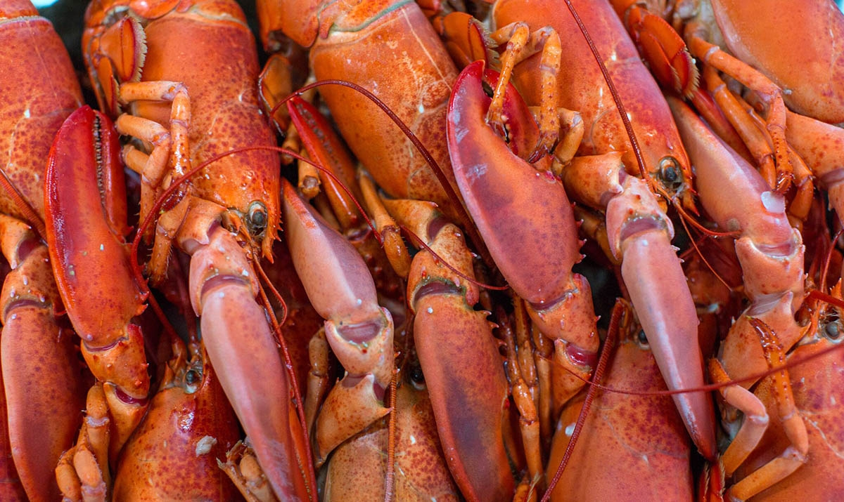 Frozen Whole Cooked Lobster